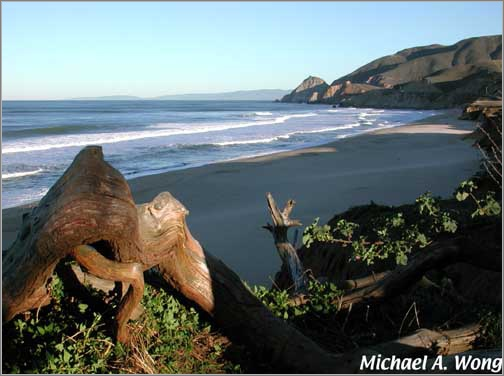 half moon bay ca south of san francisco good whale. Black Bedroom Furniture Sets. Home Design Ideas