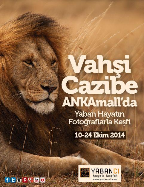 Ankara'da vahşi cazibe rüzgarı esiyor!  #VahşiCazibe fotoğraf sergisi 10-24 Ekim 2014 tarihleri arasında #ANKAmall'da.