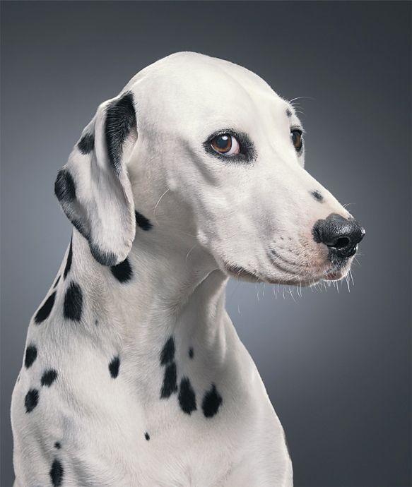 Pour ce photographe, les animaux prennent la pose… tels des top models ! Et ils…