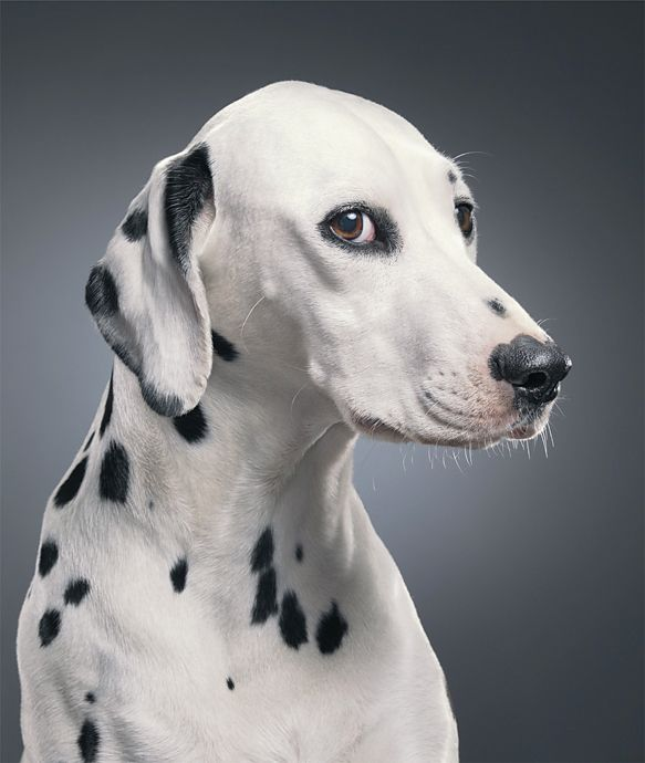 tim flach is boss when it comes to animal portraits