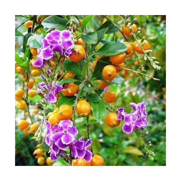 1009 best vente de graines de plantes images on pinterest. Black Bedroom Furniture Sets. Home Design Ideas