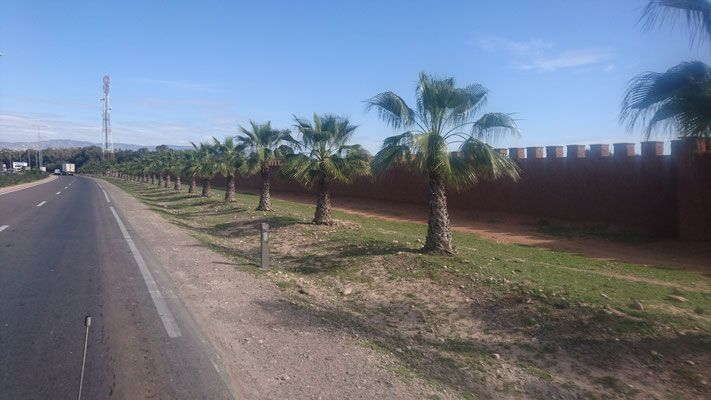 Marokko Strasse Palmen  Morocco road palm trees