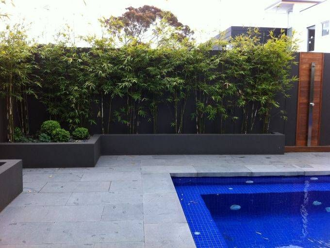 Description of clumping bamboo types i want in the garden for Garden pools for sale
