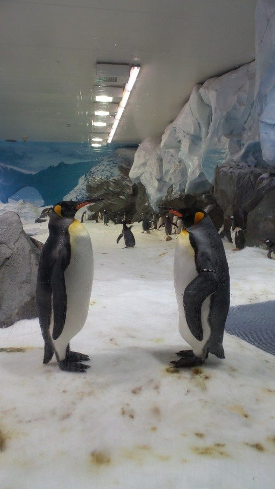 Penguin Encounters at Sea World on the Gold Coast in Queensland, Australia