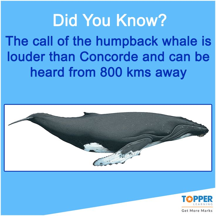 a study of the hump back whales Humpback whales expel bubbles to herd or recent results of a large study called splash estimated of 18,000- 20,000 individuals in the north pacific with a.