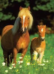 schattige paarden - Google zoeken