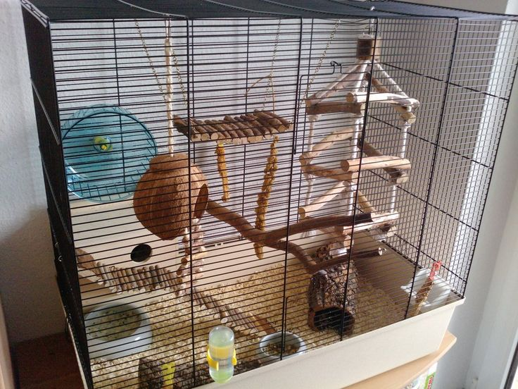 best 25 mouse cage ideas on pinterest diy rodent toys rat cage diy and diy toys for hamsters. Black Bedroom Furniture Sets. Home Design Ideas