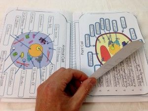 Structure of life interactive notebook inb pages mad science