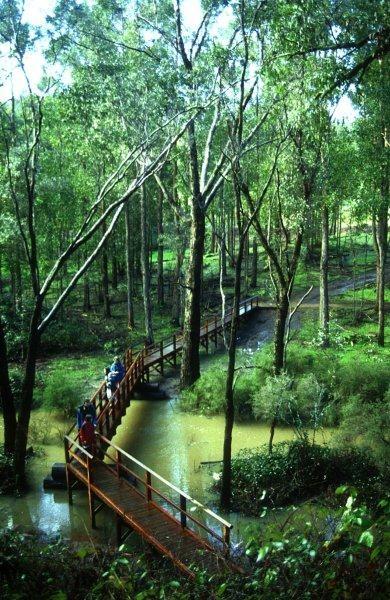 Bridge over Balingup Brook