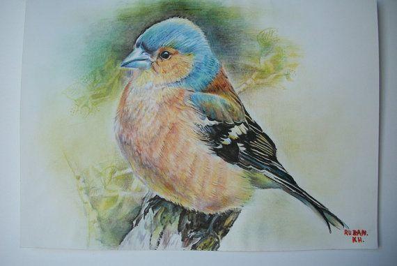 Fringuello uccello  disegno originale uccelli a di Stellangelo