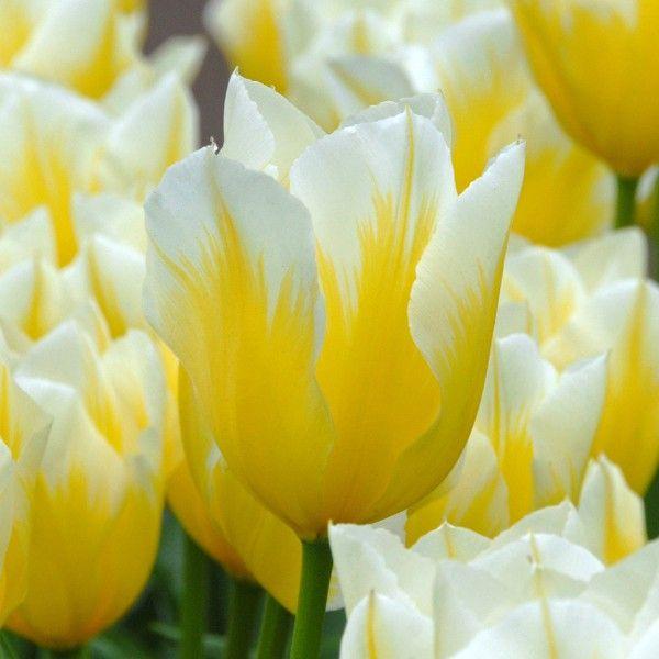 60 best Gelb images on Pinterest | Garten, Gelb und Gelbe