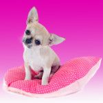 Pretty in Pink Dog Beds