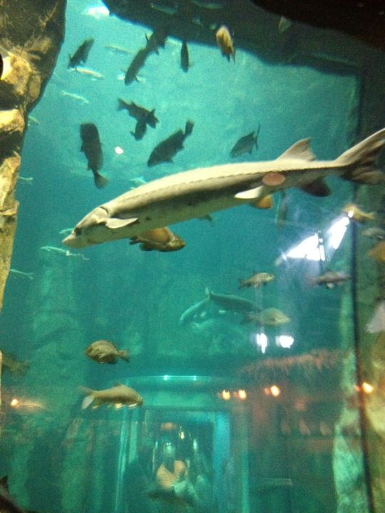 Great Lakes Aquarium in Duluth, MN | Duluth's Sights ...