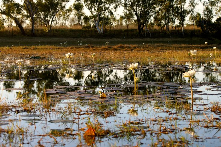 """""""Land is a central part of the connection to country and to our identity as people."""" -Australia Aboriginal saying"""