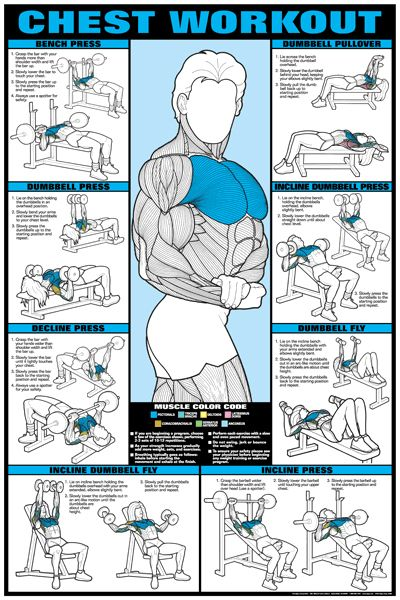 Co-Ed CHEST WORKOUT (Pectorals) Wall Chart Poster - Women & Men, Fitness, Gym, Workout, Health