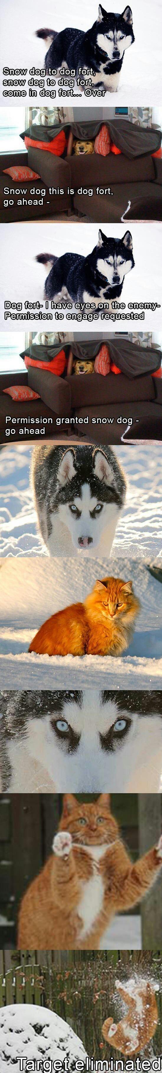 Pet wars