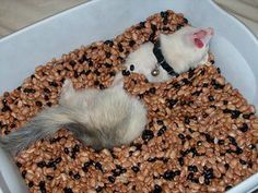 Bean dig box for ferret