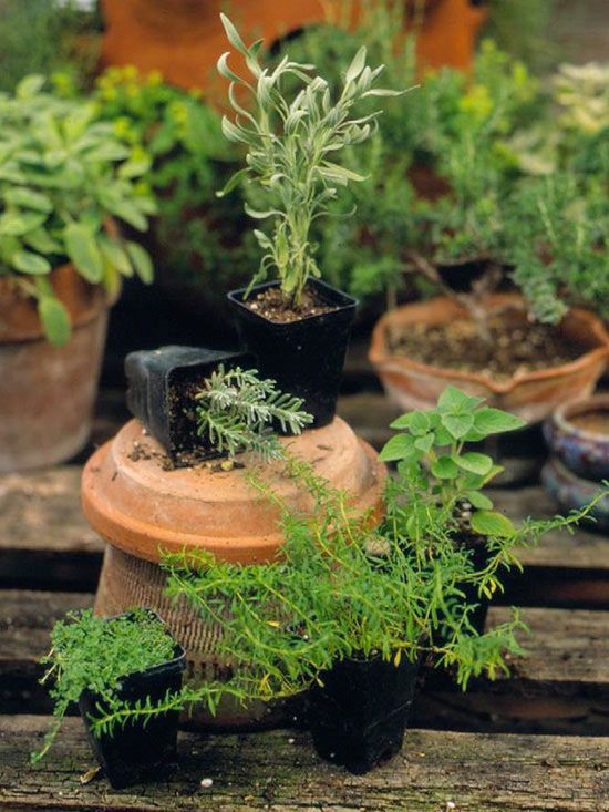 Planting Potted Herbs The messy task of potting herbs can be made simple with these three tips.
