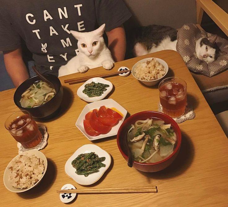 おこちゃんすっごいイカ耳w カブとキノコのあんかけうどんと、そぼろご飯と、インゲンの胡麻和えと〜トマト。 今日は熱いおうどん食べてると汗出る #八おこめ #ねこ部 #cat #ねこ #八おこめ食べ物