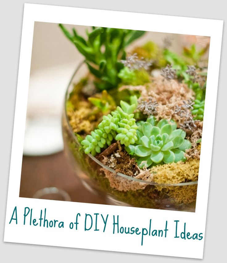 Ideas for making your own creative houseplant creations