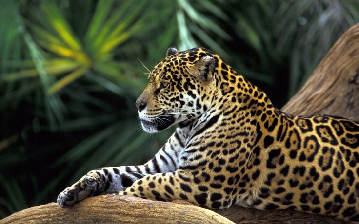 The most beautiful wild animal photos and wild animal scenes are waiting for you in this image gallery.