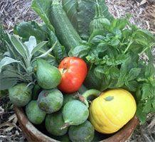 Flinders University Community Garden
