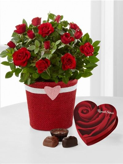 Romantic Intentions Mini Rose W Chocolates From An Interview With FTD Product Expert