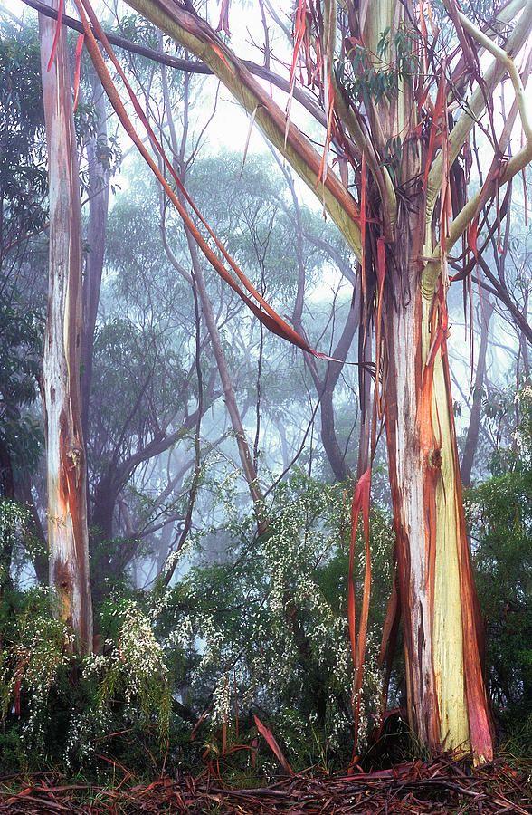 Morning Mist- Paul Chantler