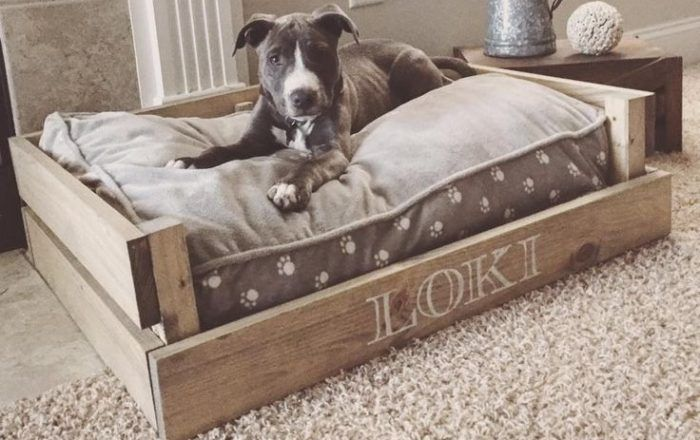 DIY dog bed frame - showing you how easy and cost-effective a DIY dog bed frame can be. The benefits and the most important aspects to consider. DIY steps.