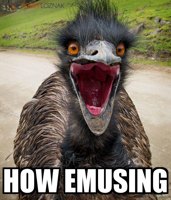 47 best Meme & funny images images on Pinterest | Design ...
