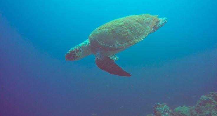 #turtle #lapalma