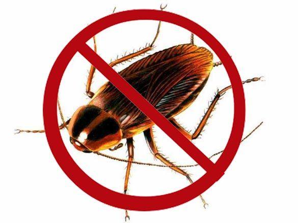 Pero El Remedio Definitivo Para Luchar Contra Las Cucarachas Es El Del Bicarbonato Y La Cebolla Lo Que Hay Que Hace Remedios Caseros Cucarachas Trucos Caseros