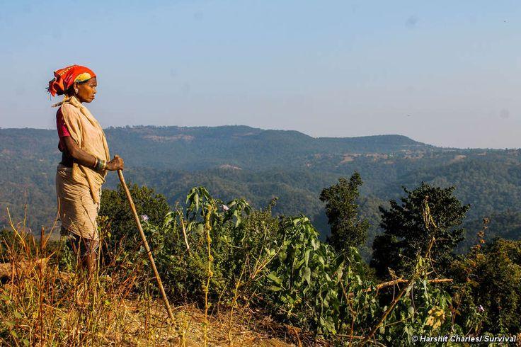 Millones de indígenas viven en las selvas de la India. La Ley de Derechos Forestales protege una buena parte de sus derechos fundamentales.