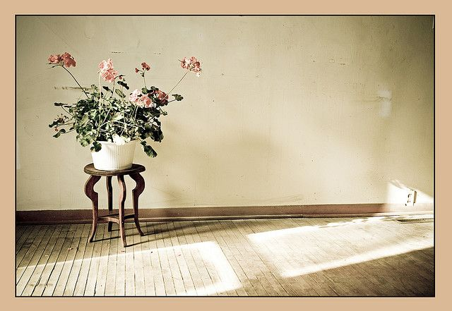 10 Tips to Get Started with Still Life Photography - Tuts+ Photography Tutorial