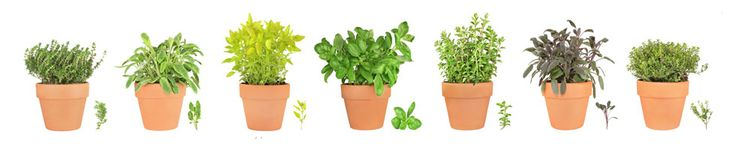 Herb Gardening Guide | Herb Garden Information | How To Grow Culinary and Medicinal Herbs