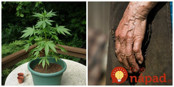 Nie je konope ako konope. Už naše babky poznali širokospektrálne účinky tohto liečiva, ktoré blahodárne, ba priam až zázračne vplýva na naše telo a celkovú pohodu.