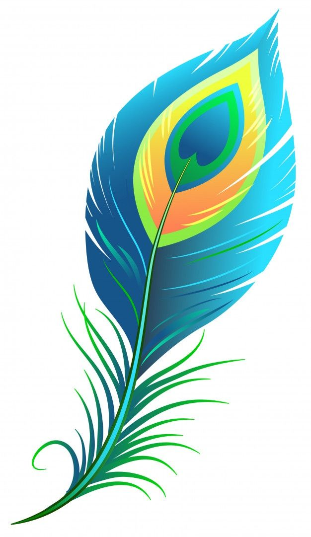 Peacock Feather Feather Illustration Flower Art Drawing Digital Art Poster