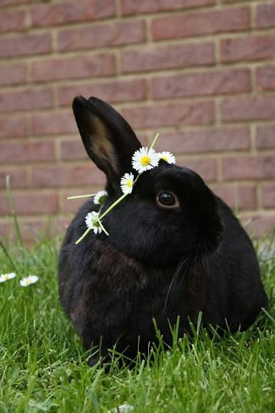 This looks like John Lloyd Penwarren Trelawney, who looked like a perfectly ordinary black rabbit but who was anything but ordinary.