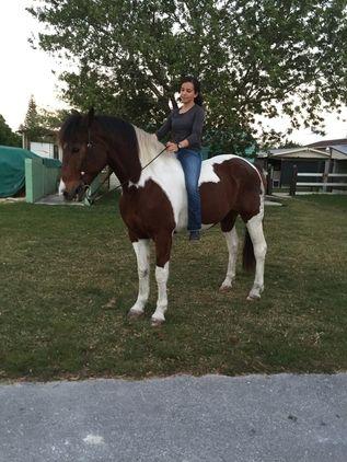 PAINT HORSE FOR SALE