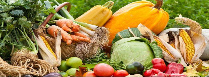 ECO agricultor - Agricultura Ecologica, Agroecologia, Huerta