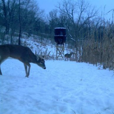 Add Windows To Your Hunting Blind Deer Hunting And Deer