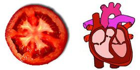A Tomato has four chambers and is red in color, so also the heart is red and has four chambers. Research has confirmed that tomatoes are loaded with lycopine and it is indeed pure heart and blood food.