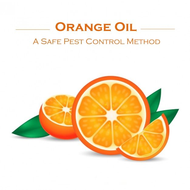 Best 25 termite pest control ideas on pinterest essential oils go green with the oldest most experienced orange oil company in california xt 2000 orange oil also known as d limonene is an essential oil derived from solutioingenieria Image collections