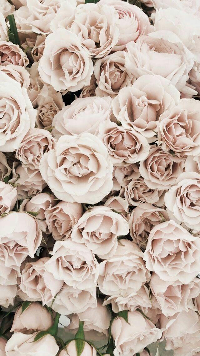 Epingle Par Julie Sur Fleurs Photographie De Fleur Fond D Ecran Pastel Belles Fleurs