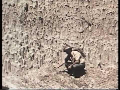Interessante lezione su cosa sono i fossili; come si formano e come si raccolgono. La ricostruzione di alcuni scenari preistorici. (Coronet Instructional Fil...