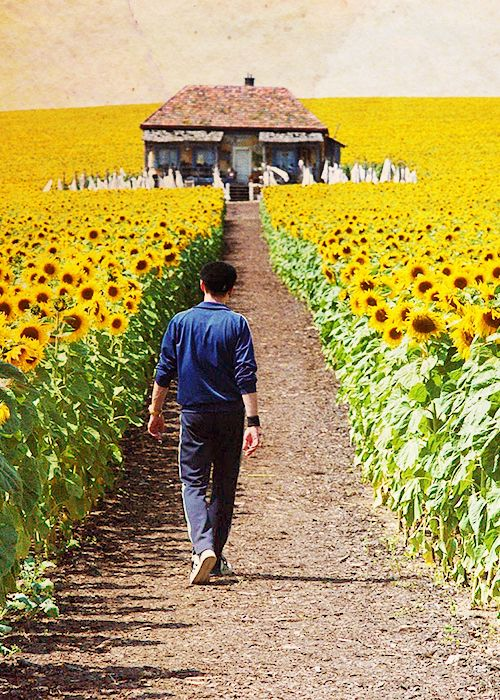 Everything is illuminated - quirky, moving, funny, intriguing, lovely, difficult, and more.