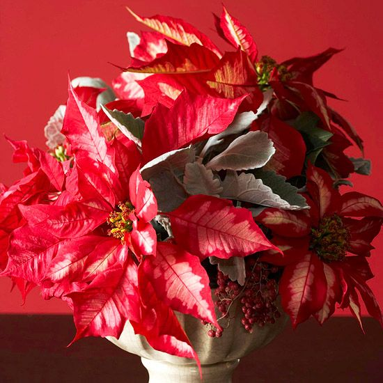 489 best poinsettia images on pinterest merry for Poinsettia arrangements