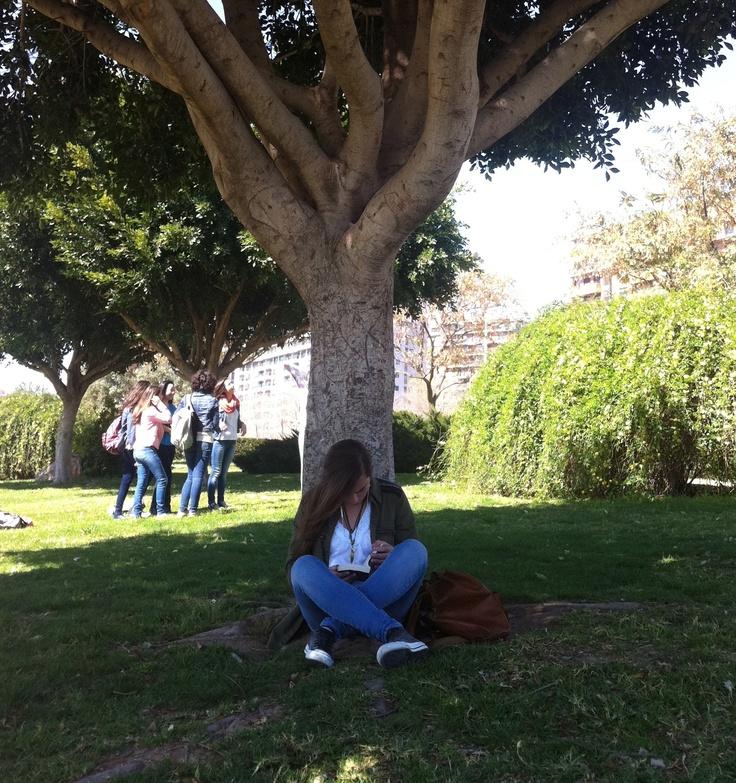 i love trees