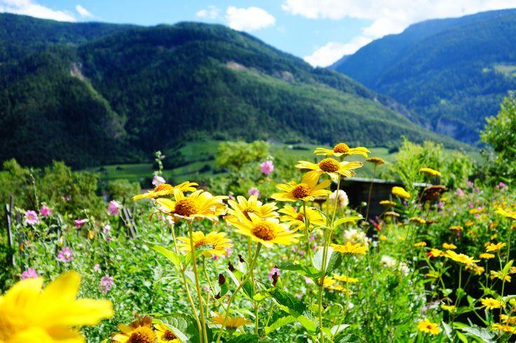 Switzerland. Wallis.