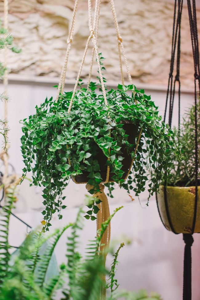 Image Via: A Daily SomethingPlants Can, Plants Stands, Hanging Plants, Diy Events, Hanging Planters, Hanging Baskets, Front Porches, Baskets Diy, Suspenders Plants